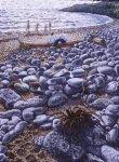 Ammonite Shore