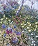 Hellebore Spring